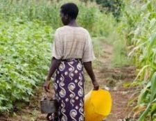 WaterAid woman in maize field