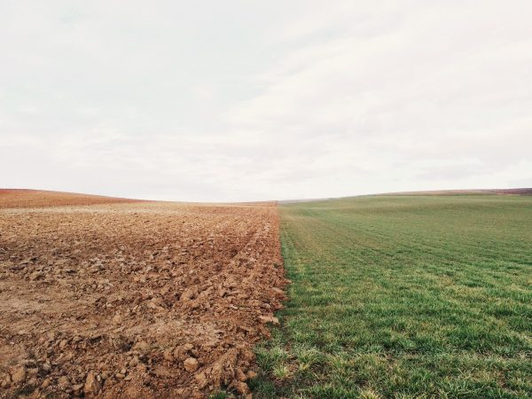 Photo of a field split with dirt on one side and green grass on the other side.